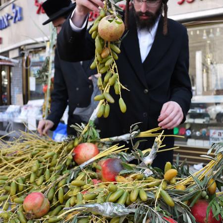 Nel quartiere di Mea She'arim un ebreo ultraortodosso è intento a scegliere i rami occorrenti per la festa delle Capanne. (fotogallery 1/9)