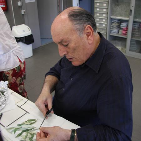 Il professor Antonio Cimato, primo ricercatore dell'Istituto per la Valorizzazione del Legno e delle Specie Arboree del Consiglio Nazionale delle Ricerche (IVALSA-CNR), allestisce campioni di foglie degli ulivi del Getsemani per l'analisi sul DNA.