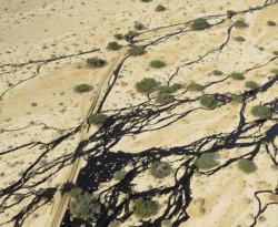 Catastrofe ecologica nel sud di Israele