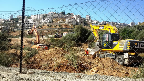 Una ruspa israeliana in azione tra gli uliveti di Cremisan confiscati alle famiglie palestinesi di Beit Jala. (clicca sull'immagine per la galleria)
