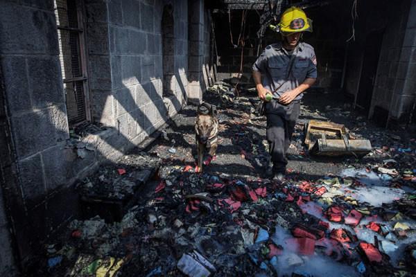 Unità cinofila dei vigili del fuoco in azione a Tabgha.