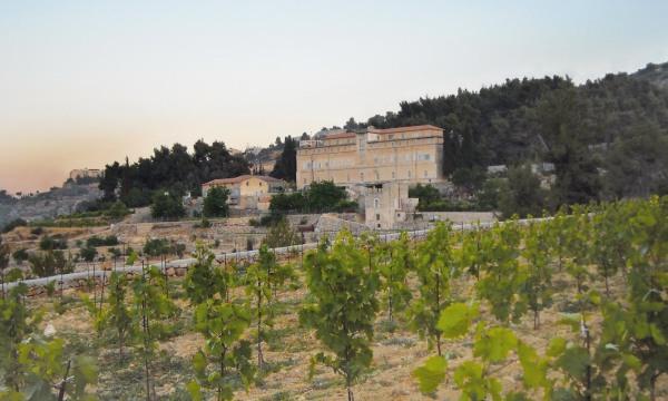 Nelle vigne di Cremisan