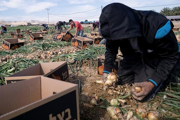 I palestinesi che lavorano negli insediamenti