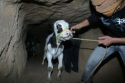 Nuova azione di contrasto dell'Egitto contro i tunnel di Gaza