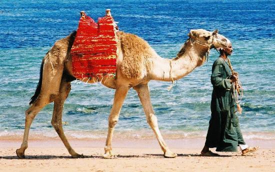Rivolte arabe, turismo in allarme