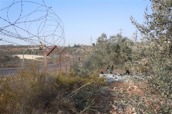 La campagna <i>Albero d'ulivo</i> per tener viva la speranza dei palestinesi