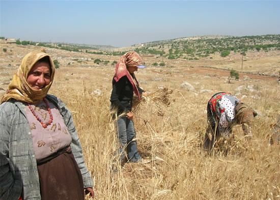 In Siria e Giordania agricoltura in crisi per la siccità