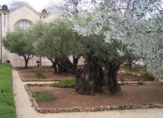 Getsemani. Testimonianze dal silenzio