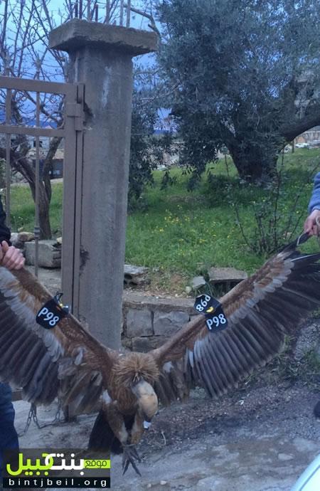 Israele e Libano, storie di droni e grifoni