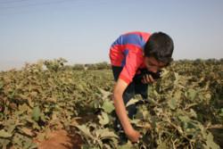 L'Autorità Palestinese boicotta i prodotti degli insediamenti israeliani