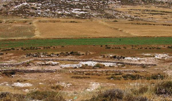 Un progetto agricolo italo-palestinese a sud di Hebron