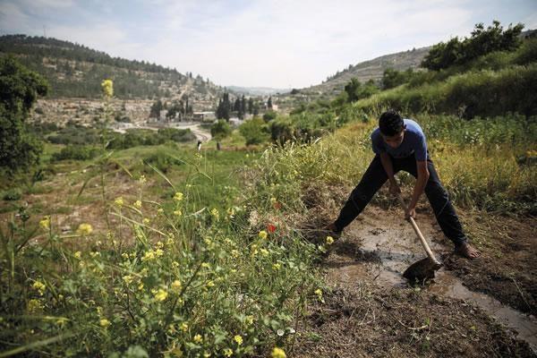 Mazin Qumziyeh. In difesa della natura