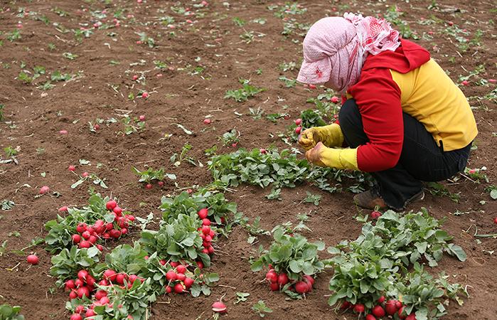 Nel cibo si riflettono le molte crisi del Libano