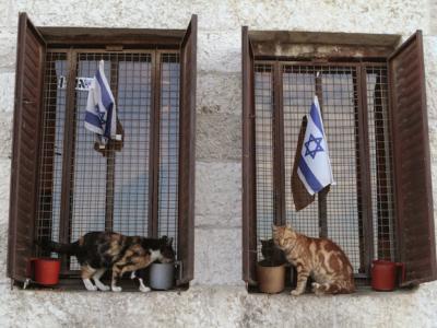 Istanbul e Gerusalemme città dei gatti