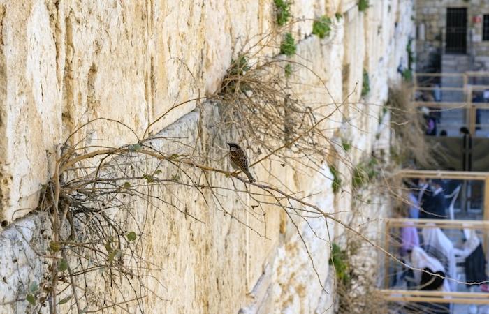 Una varietà di piante e uccelli popola l'antica parete.